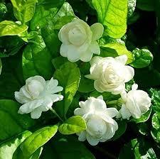 19 permanent flowering plants(1)