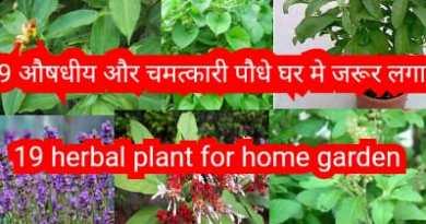 19 Herbal plants for home garden