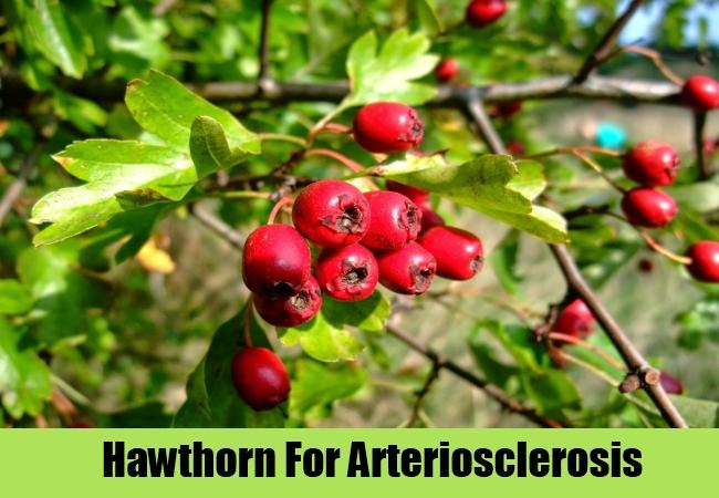Hawthorn For Arteriosclerosis