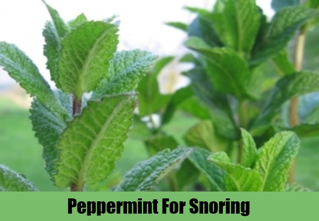 Peppermint For Snoring
