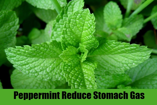 Peppermint Reduce Stomach Gas