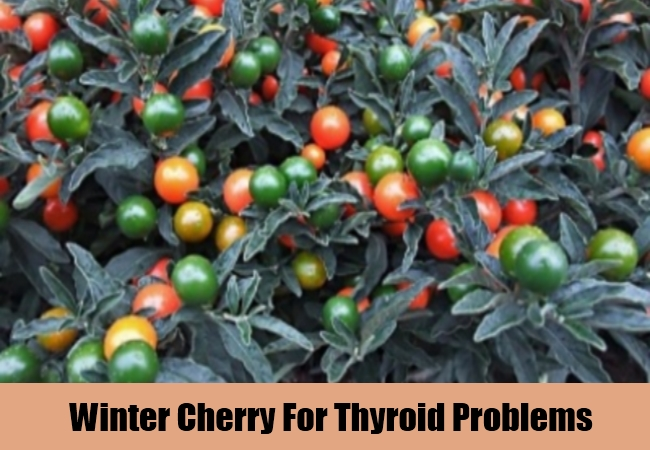 Winter Cherry For Thyroid Problems