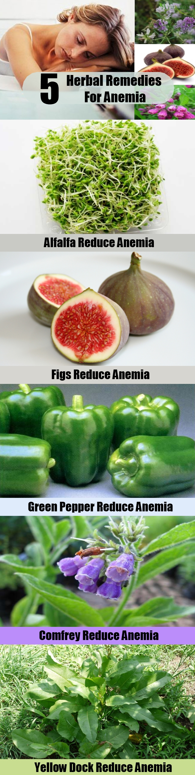 5 Excellent Herbal Remedies For Anemia