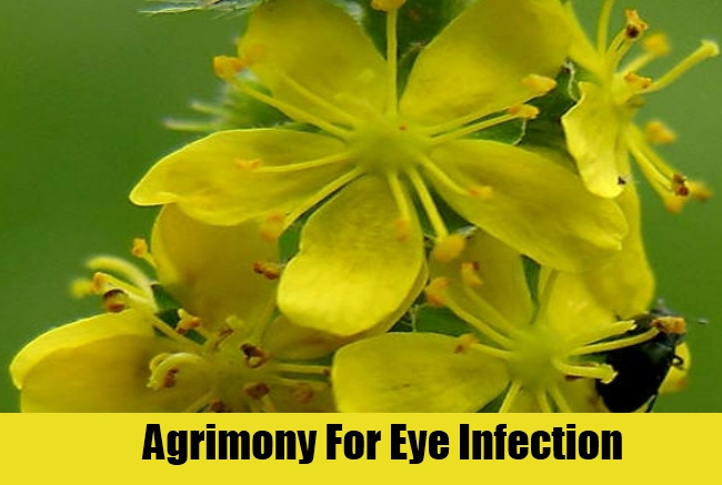 Agrimony For Eye Infection