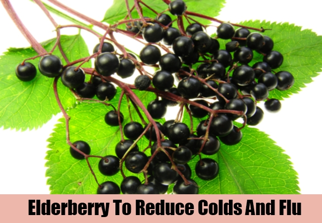 Elderberry To Reduce Colds And Flu