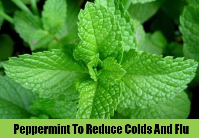 Peppermint To Reduce Colds And Flu