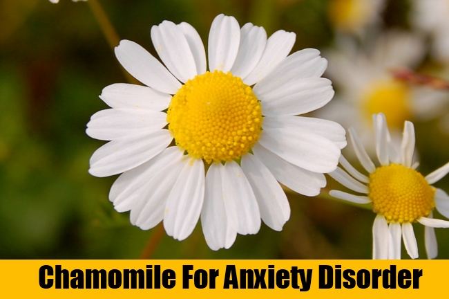 Chamomile For Anxiety Disorder