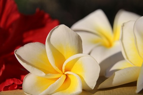 Lotusblüte hawaiianische Massage