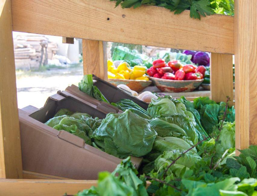 Pick Your Own Fruits and Vegetables at Al Rahba Organic Farms