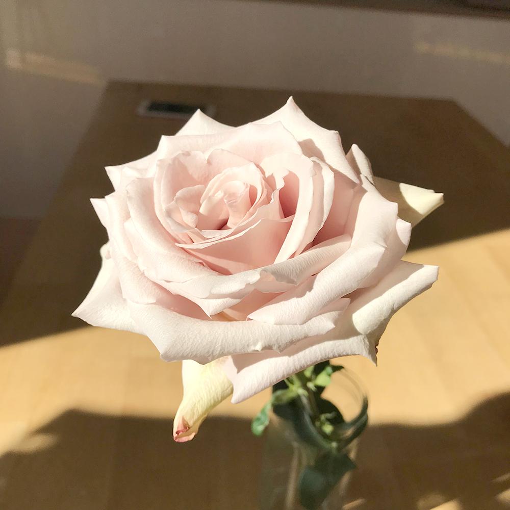 絵画教室ビルド日記 | 白いバラ | 麻布十番のアトリエ