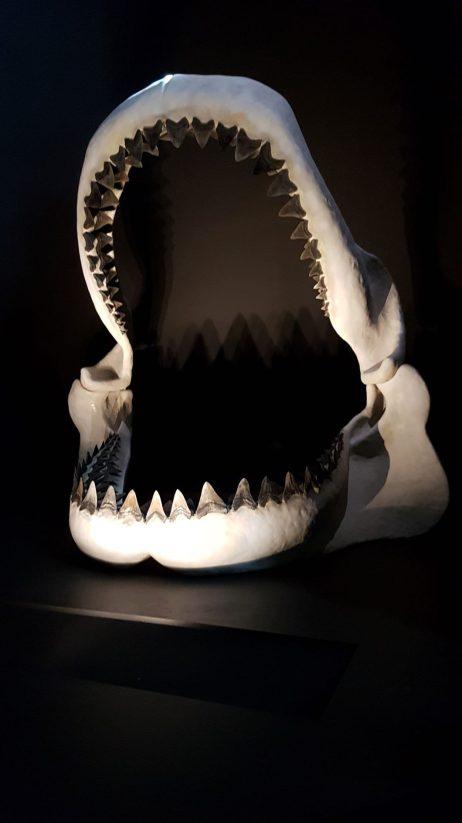 L'ancêtre du Requin Blanc en version XXL