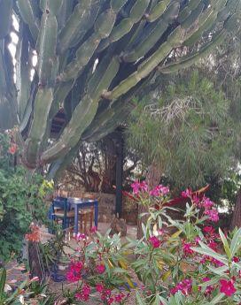 Le superbe cactus devant le coin repas