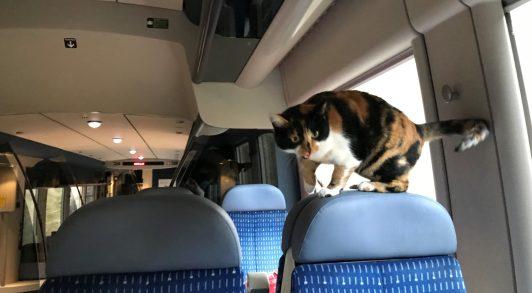 Pom' dans le train.