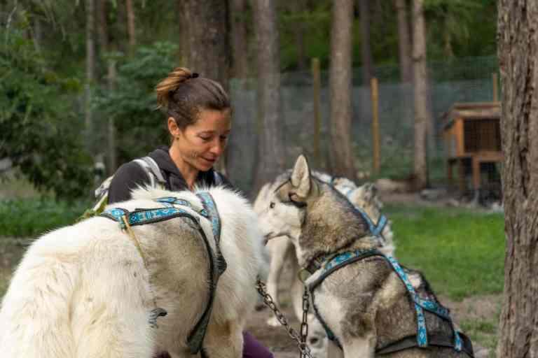 Chenil-musher-chiens