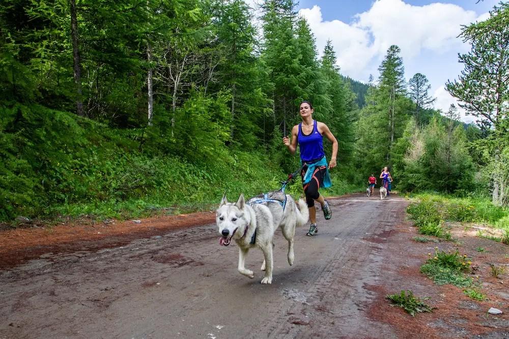 Course à pied avec chien attelé