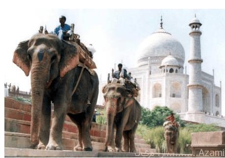 هندوس الفيل
