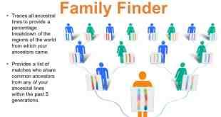 سلالة العائلة