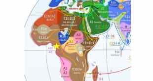 خريطة السلالات البشرية، جينات