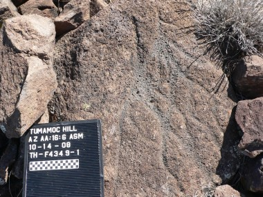 Western archaic petroglyph on Tumamoc Hill - photo by Janine Hernbrode