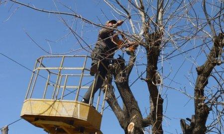Շուտով Երևանում կմեկնարկի գարնանային էտը
