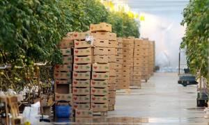 ՌԴ-ն կշարունակի Վրաստան ներմուծել ու արտահանել գյուղատնտեսական ապրանքներ