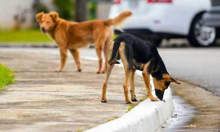 Շների վրա կրակողները հայտնաբերվել են