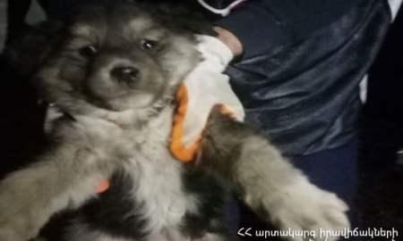 Փրկարարները շանը դուրս են բերել վերելակի հորանից