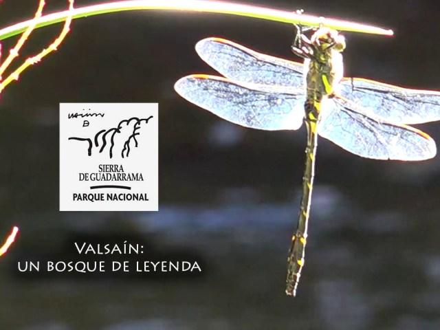 Valsaín, un bosque de leyenda