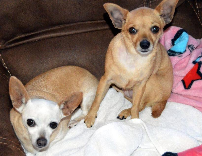 COCO and CHINA