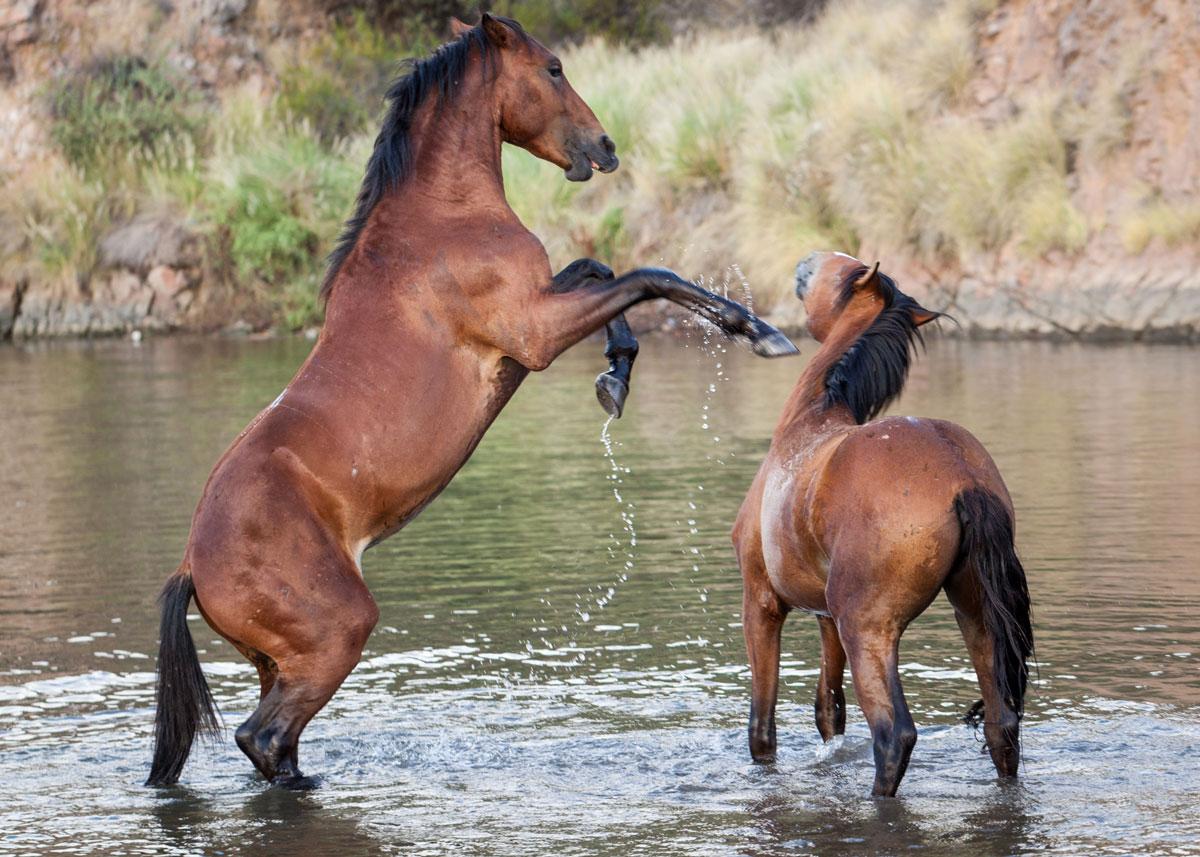 Horses along the Salt River. AZCIR