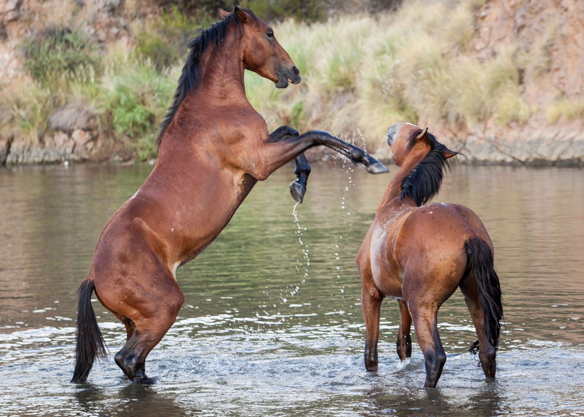 Horses along the Salt River. AZCIR