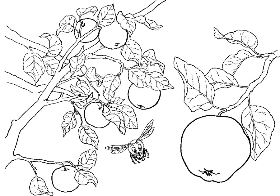 apple tree coloring page az coloring pages