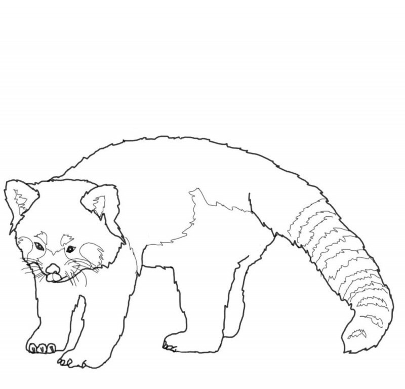 Large Printable Coloring Picture Of Red Panda Coloring Pages