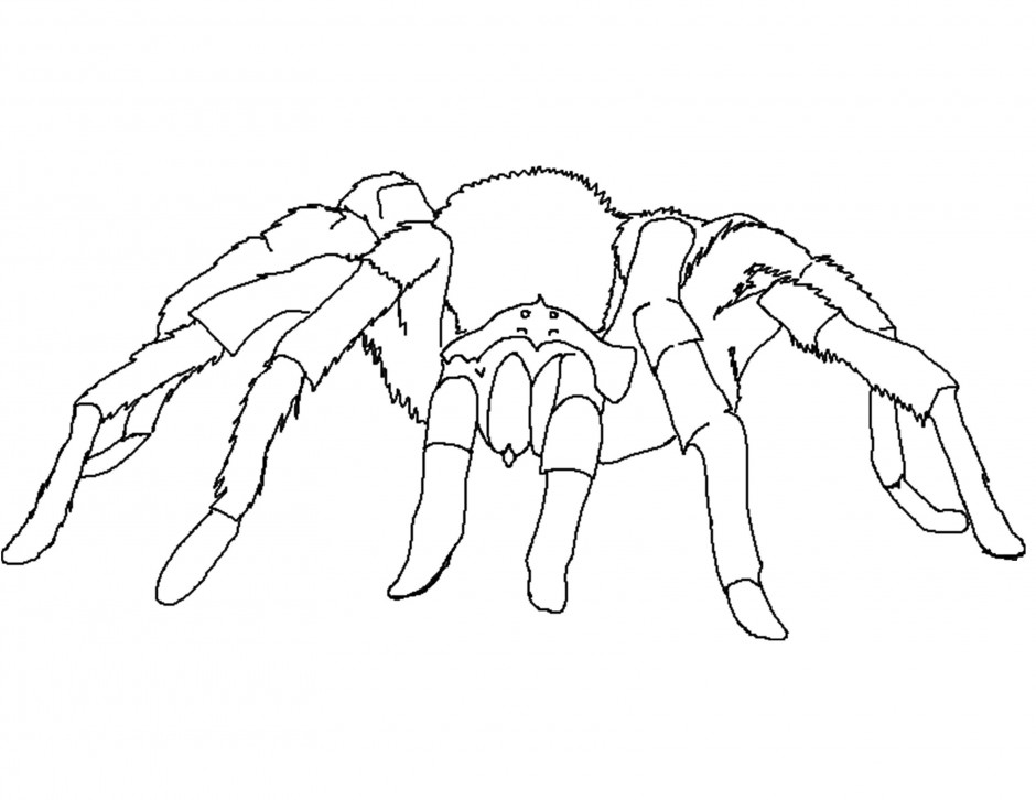 spider and spider web coloring page in halloween spider coloring pages