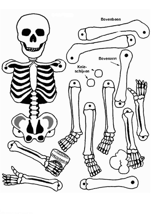human skeleton coloring page az coloring pages