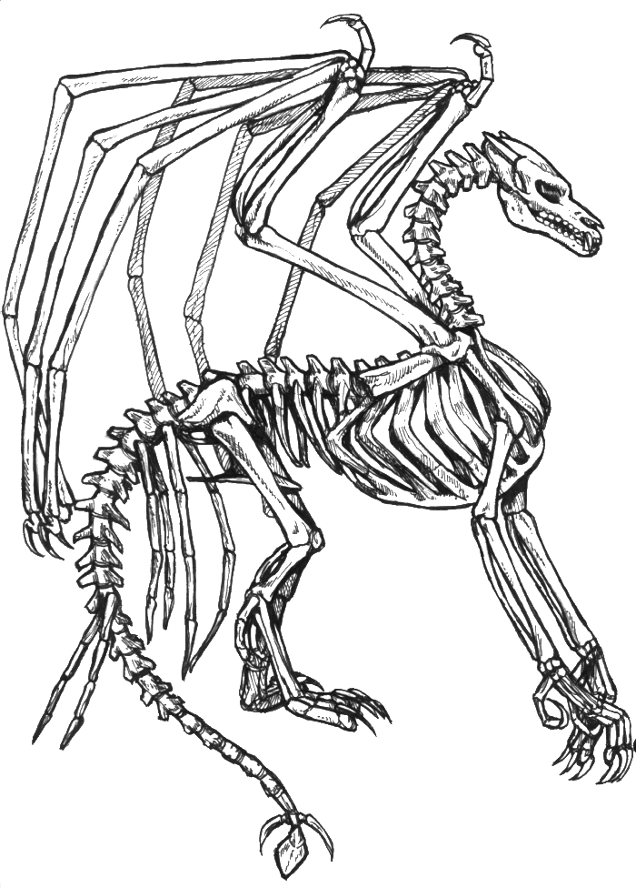 skeleton bone dragon coloring pages dragon coloring pages free
