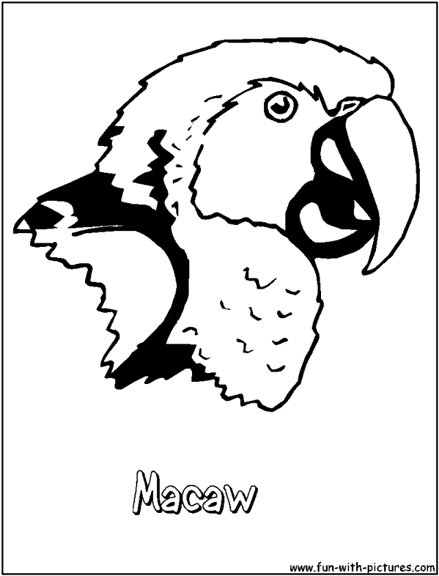 macaw coloring page az coloring pages