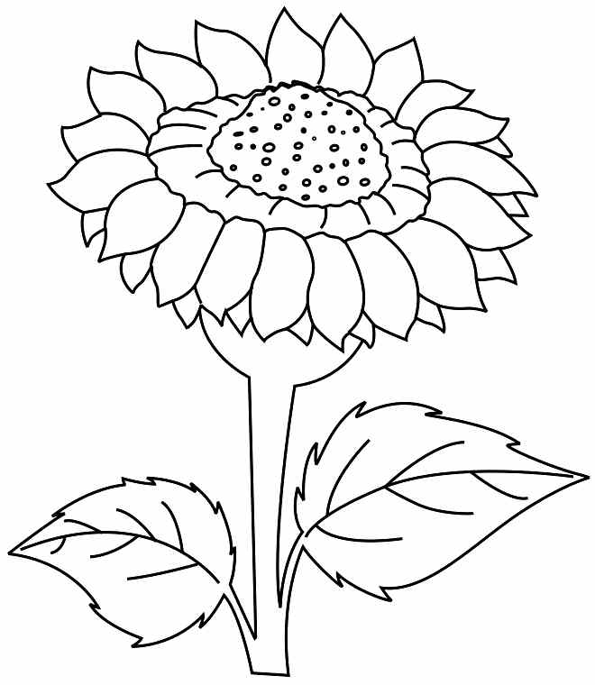 pics photos more coloring pages of flowers sunflower