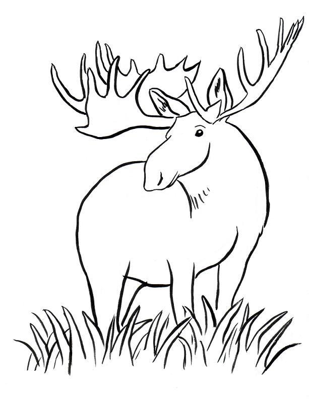 moose coloring page az coloring pages