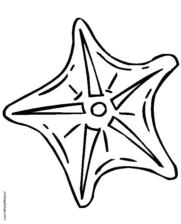 starfish coloring page az coloring pages