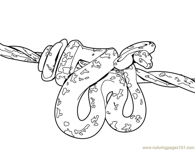 pictures of snakes to color az coloring pages