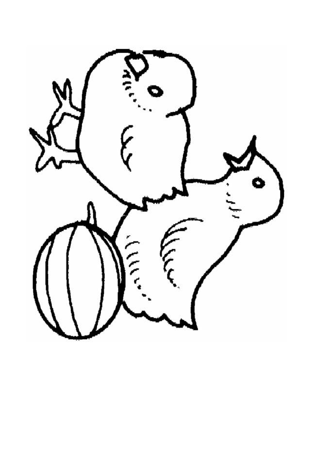 baby chick coloring page az coloring pages
