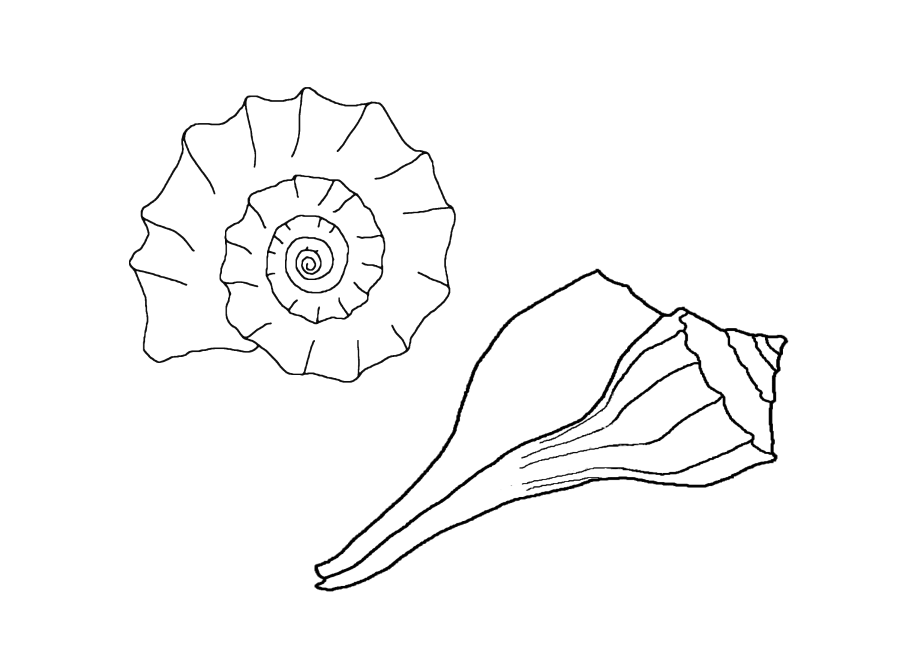 Seashells Coloring Page Coloring Home