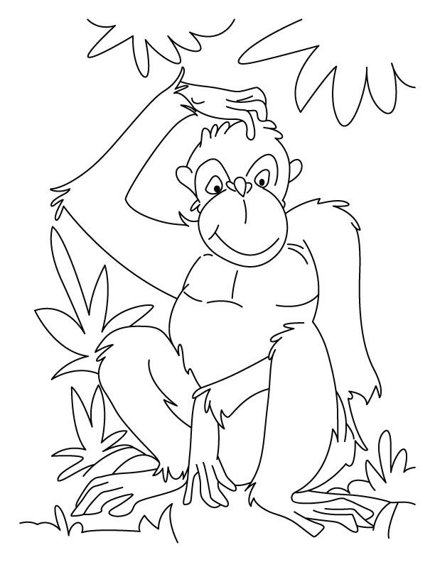 chimpanzee coloring page az coloring pages
