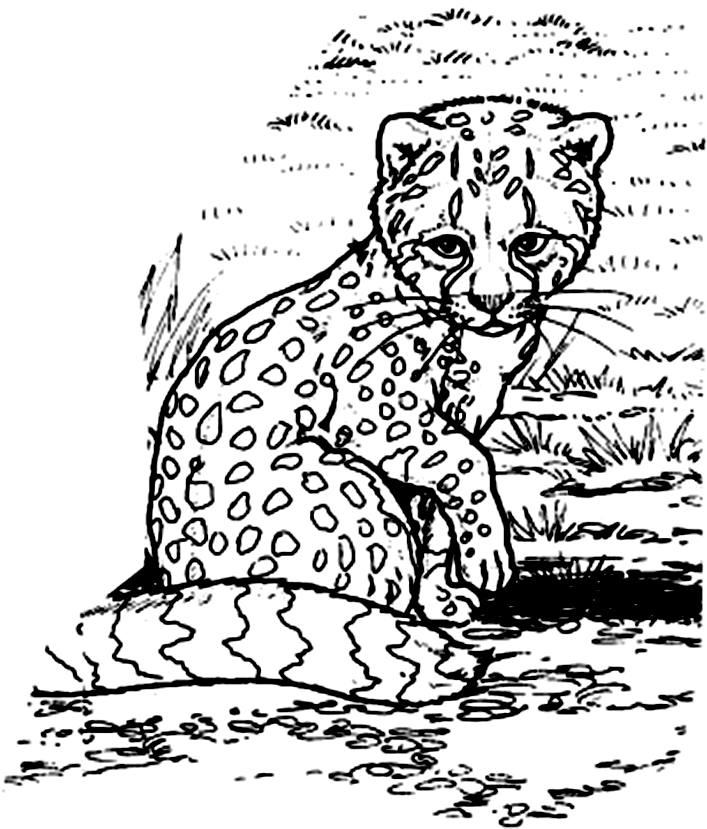 cheetah pictures to color az coloring pages