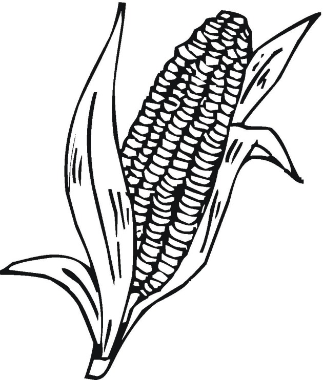 corn stalks coloring page coloring pages corn wemakesense co