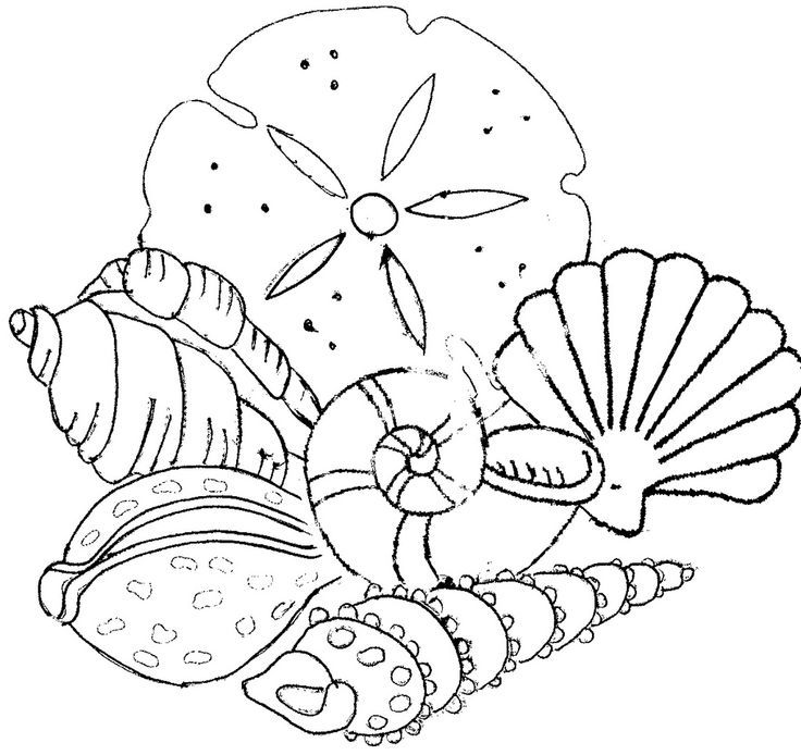beach shells coloring pages az coloring pages