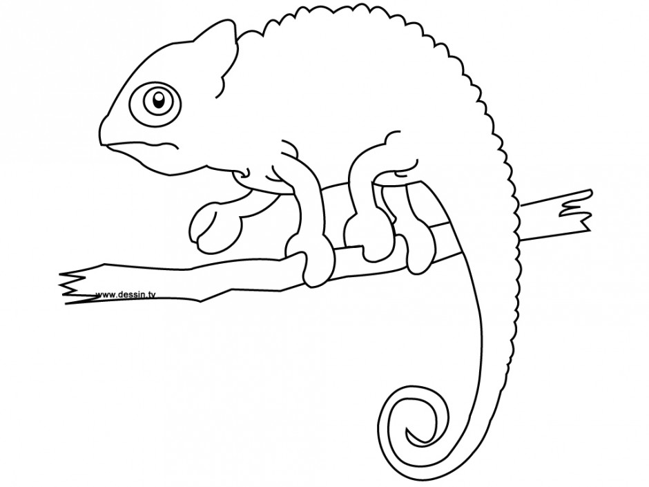 chameleon coloring page free coloring pages 266115 chameleon
