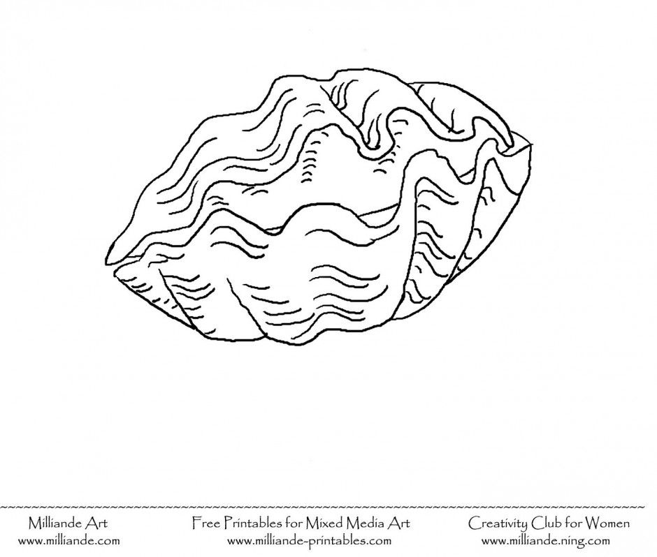 seashell coloring page 160943 sea shell coloring page