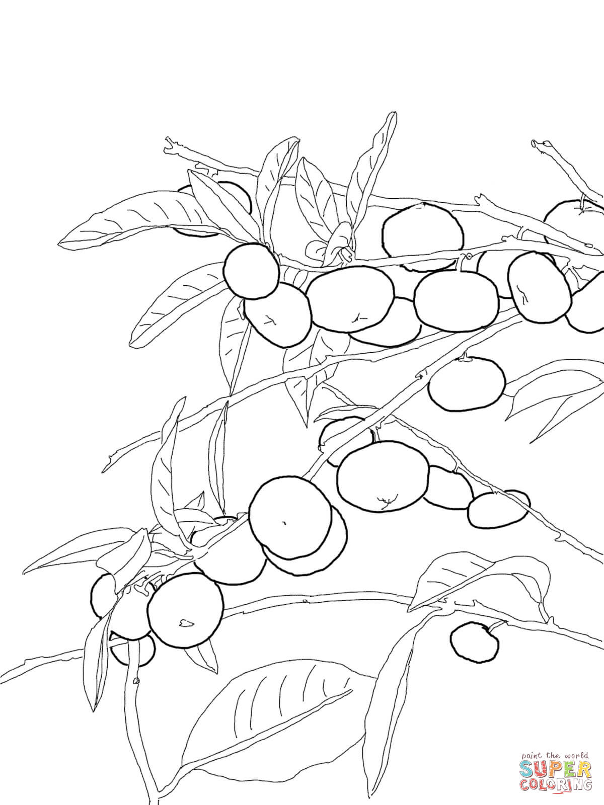 orange tree coloring page az coloring pages